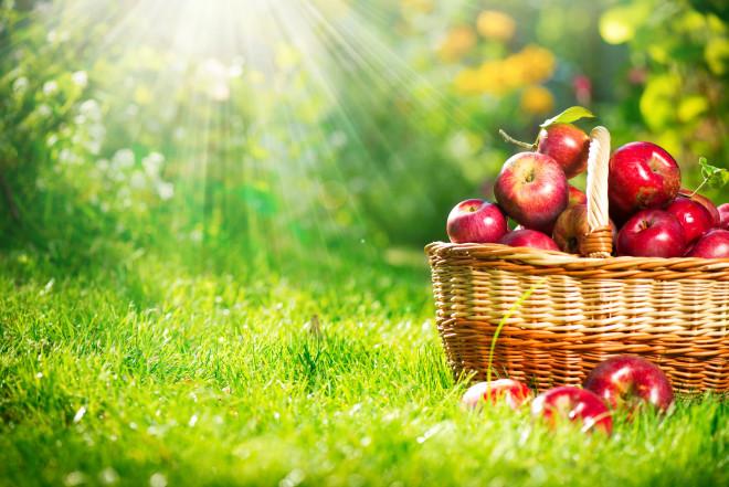 Health Eating - Altheda Health